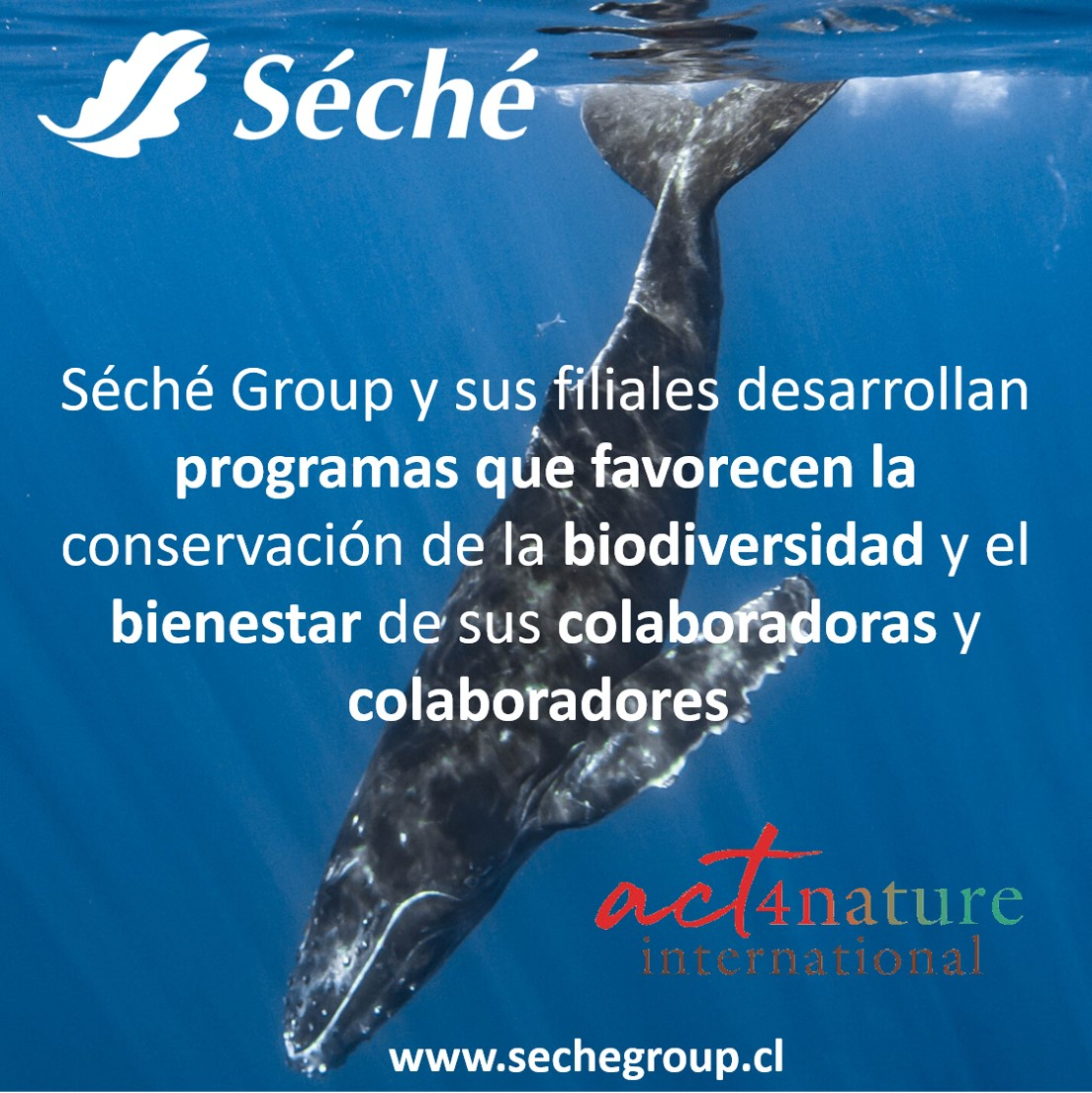 Acciones Internacional Act4nature International